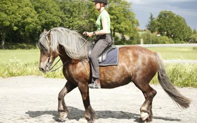Härliga Safir med Camilla på ryggen. Juni 2010.