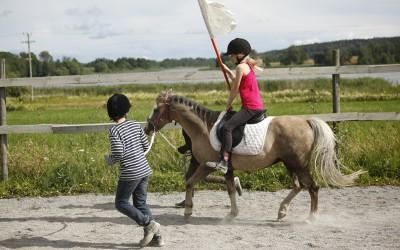 Fint samarbete i trav. Ovanligt hästdagläger juli 2012