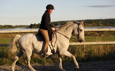 Underbara Maestoso. Camilla rider. 4 sep 2013