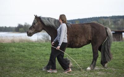 Camilla stannar Safir, lek på fältet. 11 maj 2013