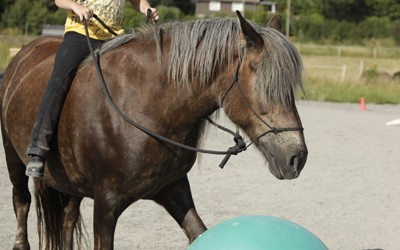 Oscar & Safir Ovanligt hästläger juli 2011