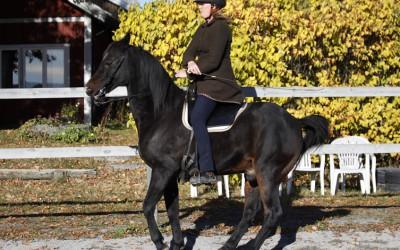 Excell & Camilla, tränar 'sätta sig'. 12 okt 2013.