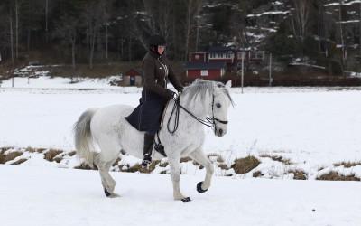 Camilla tränar Maestro. 12 feb 2015.