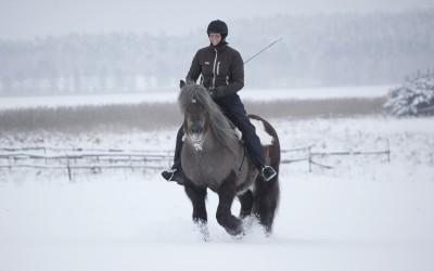 Ridning utan tyglar eller halsring på fältet. Camilla på Safir. 25 jan 2015.