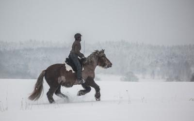 Camilla & Safir i galopp utan tyglar eller halsring. 25 jan 2015.