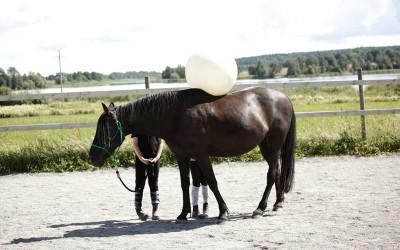 Flisan med boll på ryggen. Ovanligt hästdagläger juli 2012
