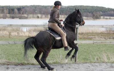Levad med fina Excell. Camilla rider. 14 april 2014.