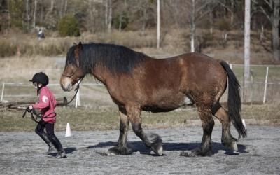 ovanligt hästläger1 april 2012