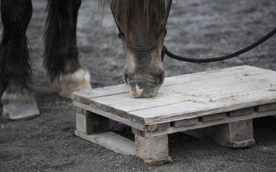ovanligt hästlager5 april2012