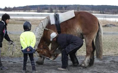 saga bugar för första gången 2012
