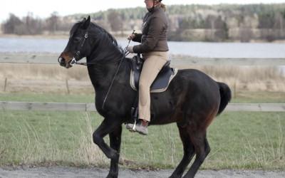 skolhalt med tjusiga Excell. Camilla rider. 14 april 2014.