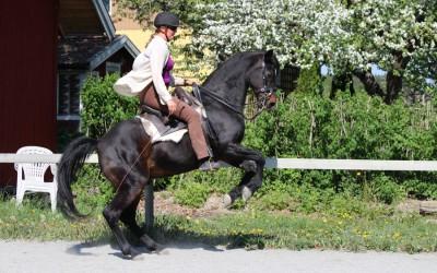 Mäktiga hästkrafter. Camilla & Excell 24 maj 2016.