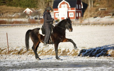 Excell och Camilla visar spansk skritt. 3 februari 2016.
