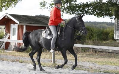 Camilla galoperar Flisan. 24 sep 2016