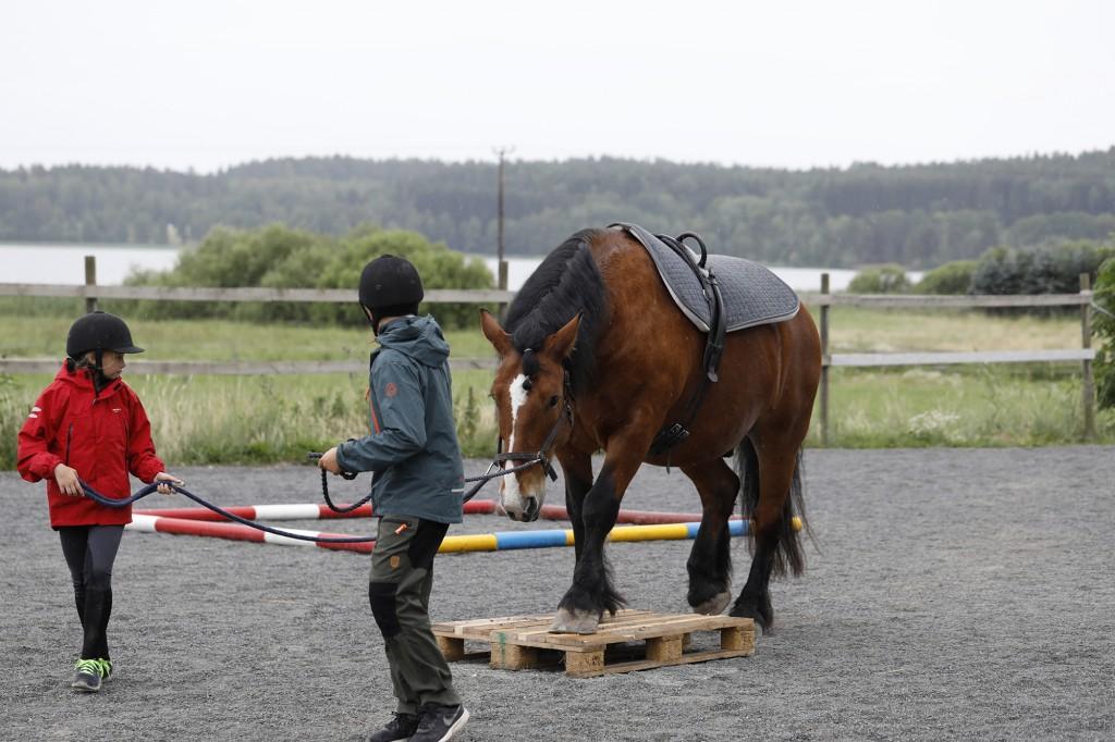 hästläger_stallangen3