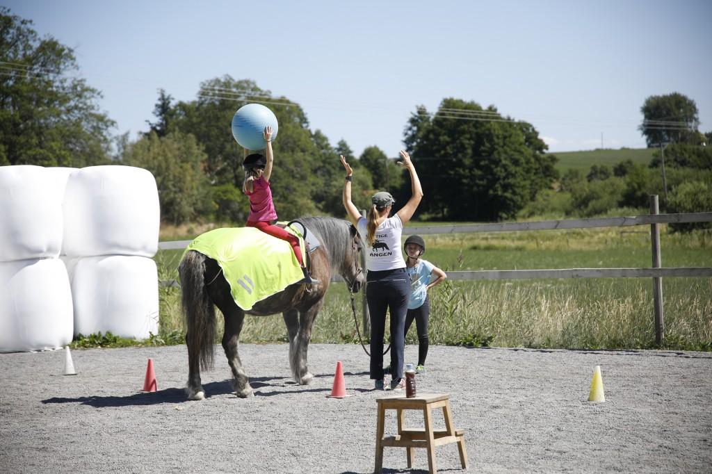 hästläger_stallangen4
