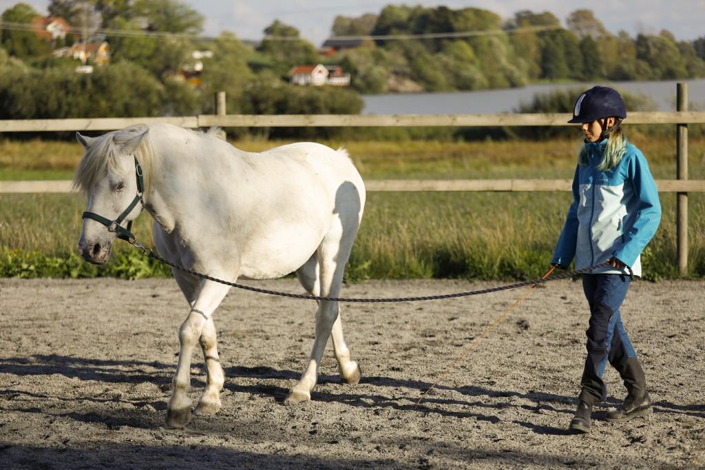 frihetsdressyrkurs_med_lånad_häst_stallangen