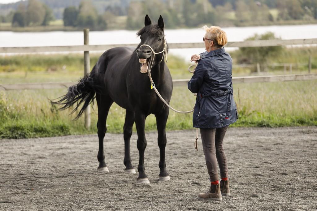 frihetsdressyrkurs_med_lånad_häst_stallangen1