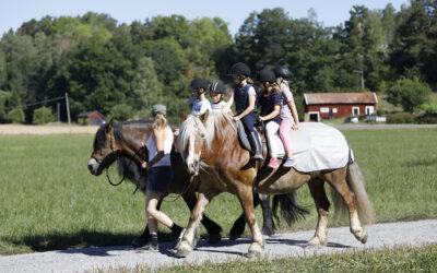 Ovanligt hästdagläger aug 2020
