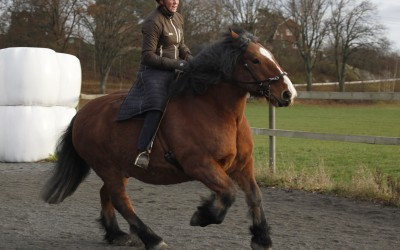 Luftig galopp med Bellman. Camilla på ryggen. 23 nov 2014.