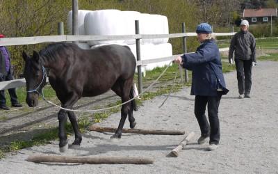 Annika & Flisan NH-kurs maj 2012