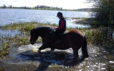 Bellman plaskar i vattnet i Avlasjön med Selma på. 15 maj 2013