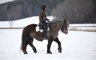 Camilla tränar Safir. 14 februari 2015.
