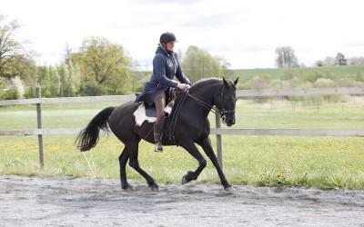 Camilla galopperar Flisan. 17 maj 2015.