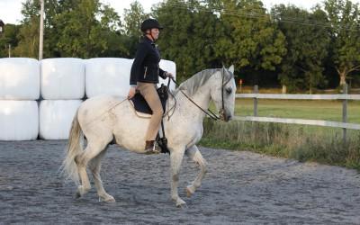 Älskade Maestoso. Camilla rider. 4 sep 2013