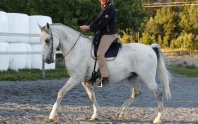 Fina Maestoso. Camilla rider. 4 sep 2013.