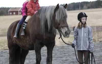 ovanligt hästläger2 april 2012