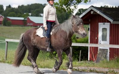 Camilla rider utan träns på Safir. 11 juni 2016