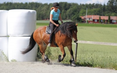 Camilla tränar Hubbe den 7 juli 2017