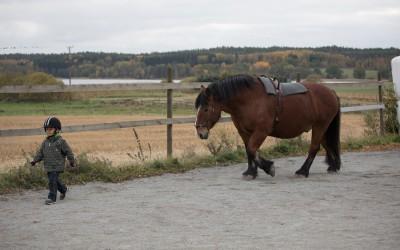 Stor häst följer med liten människa. 12 okt 2016.
